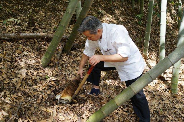 陣屋の裏庭で竹の子を掘る料理長