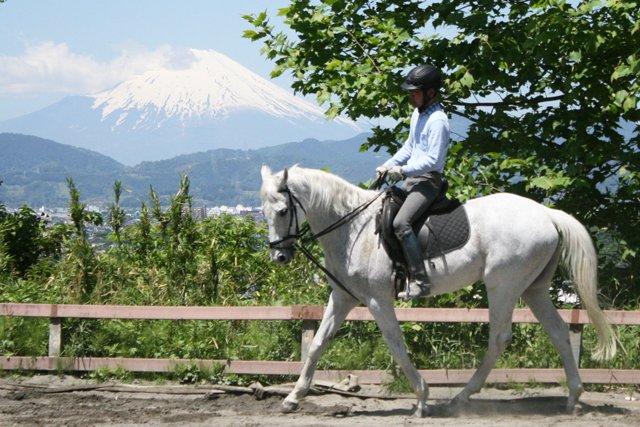 秦野国際乗馬クラブ