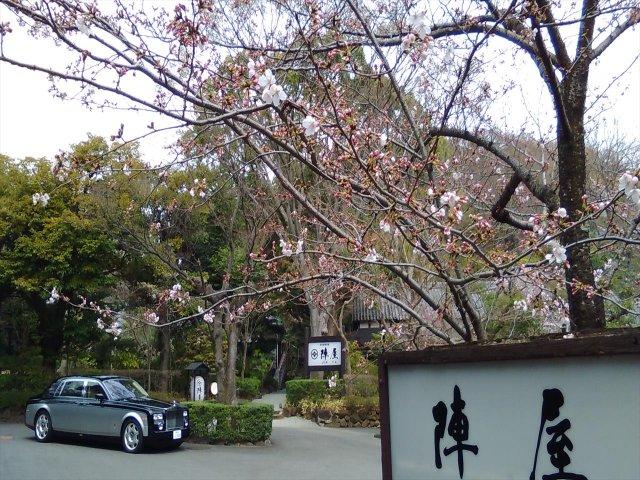 4月1日現在<br> まだ花が少ない木もあります。