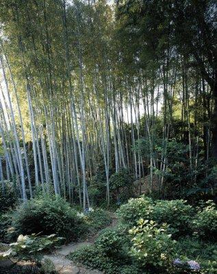 Native bamboo foreste