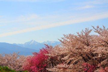 大山 VS 弘法山、陣屋と合わせて楽しめるハイキング特集